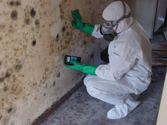 Why You Should Hire a Professional Mold Remediation Company?